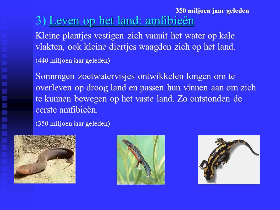 3) Leven op het land: amfibieën