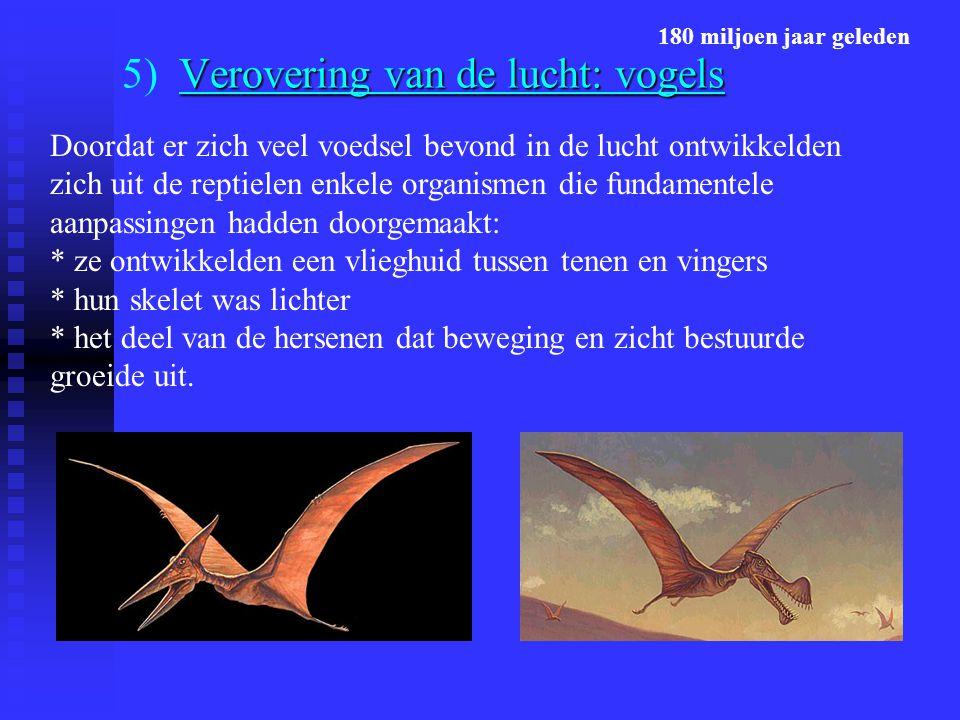 5) Verovering van de lucht: vogels
