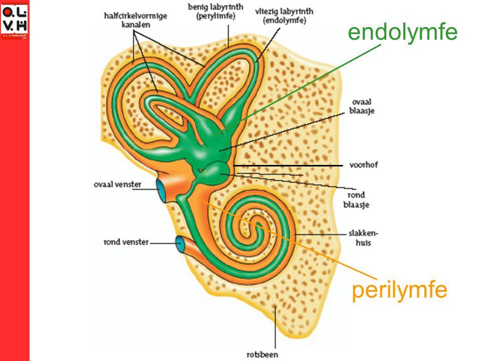endolymfe perilymfe