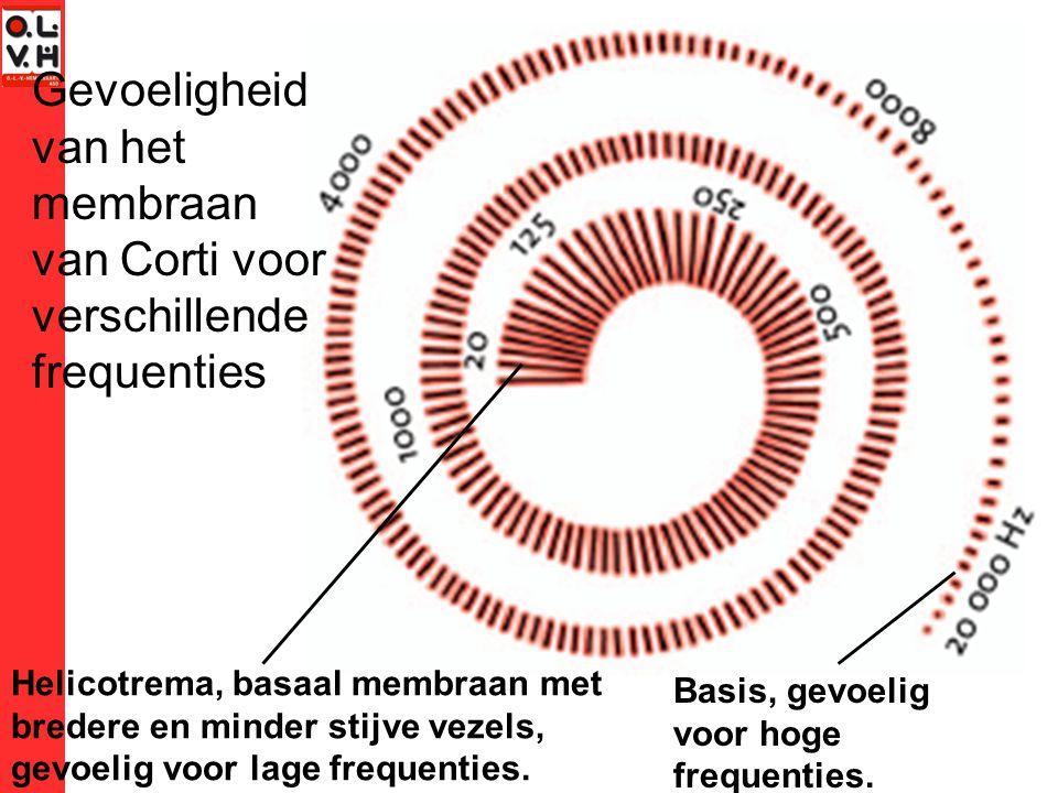 Gevoeligheid van het membraan van Corti voor verschillende frequenties