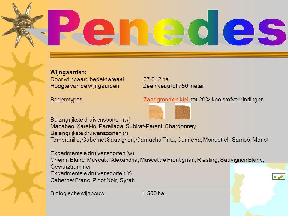 Penedes Wijngaarden: Door wijngaard bedekt areaal 27.542 ha