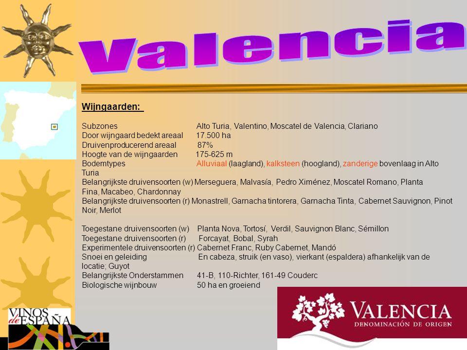 Valencia Wijngaarden: