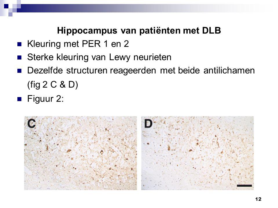 Hippocampus van patiënten met DLB