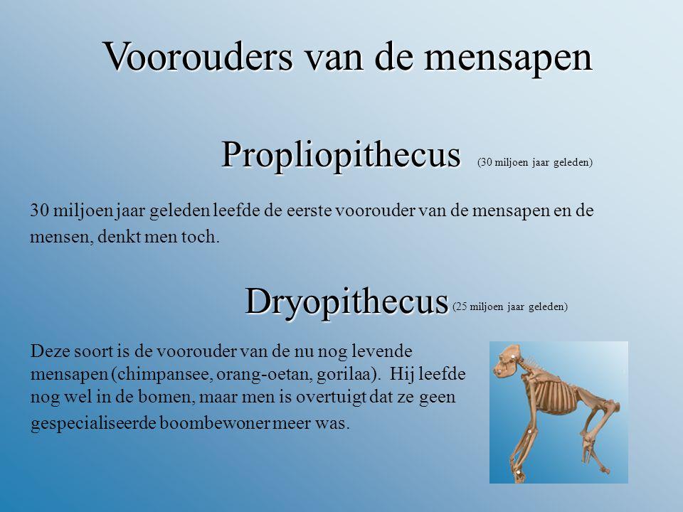 Voorouders van de mensapen