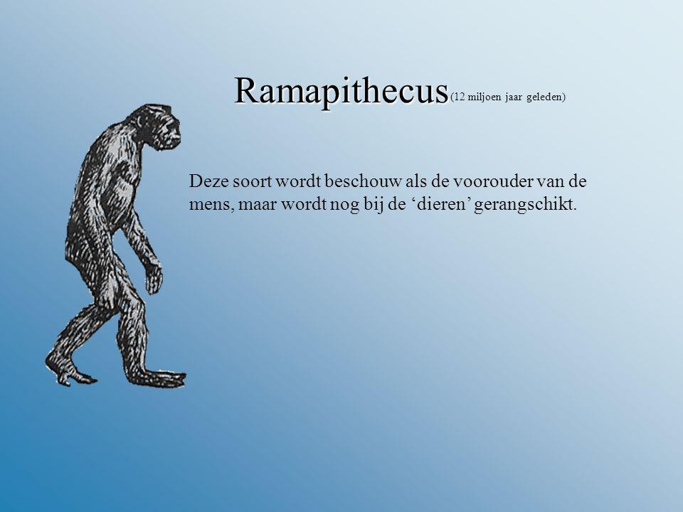 Ramapithecus (12 miljoen jaar geleden) Deze soort wordt beschouw als de voorouder van de mens, maar wordt nog bij de 'dieren' gerangschikt.