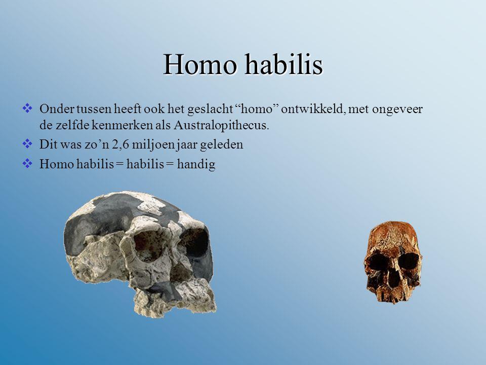 Homo habilis Onder tussen heeft ook het geslacht homo ontwikkeld, met ongeveer de zelfde kenmerken als Australopithecus.