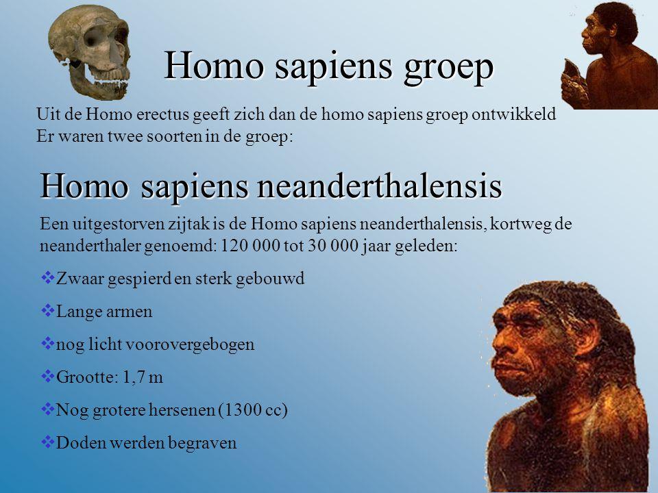 Homo sapiens groep Homo sapiens neanderthalensis