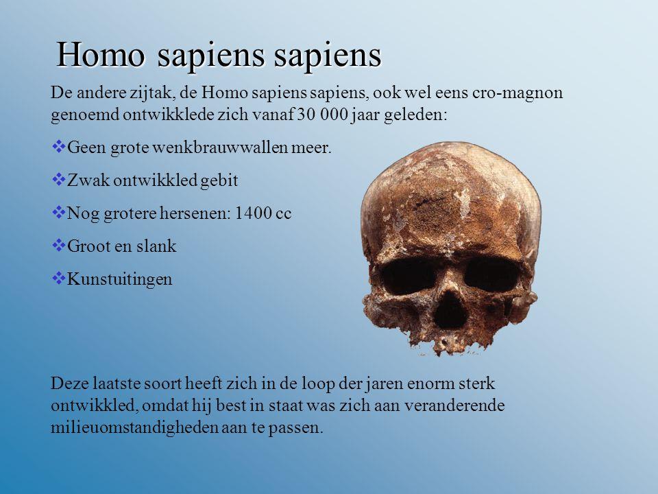 Homo sapiens sapiens De andere zijtak, de Homo sapiens sapiens, ook wel eens cro-magnon genoemd ontwikklede zich vanaf 30 000 jaar geleden: