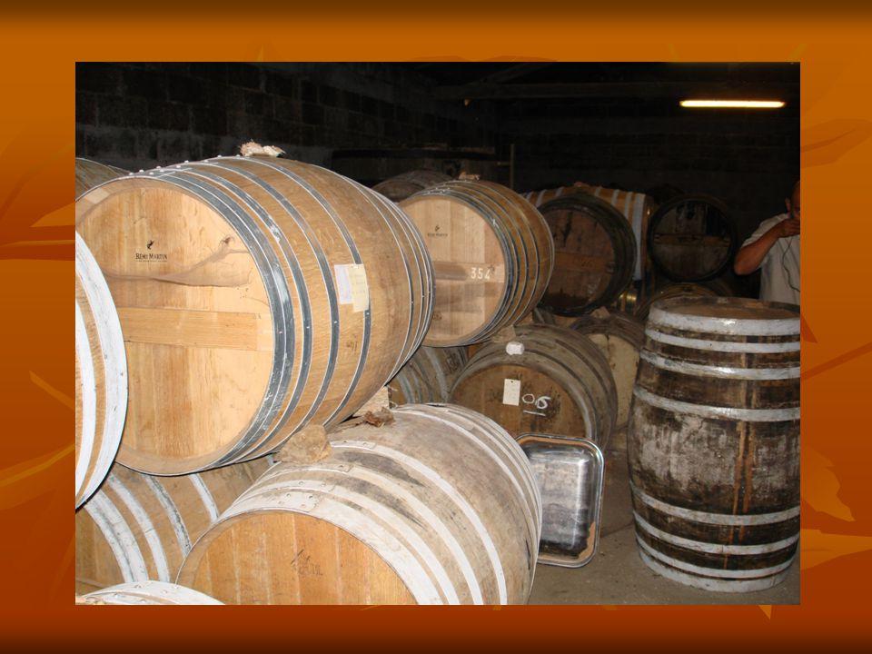 Vaten Remy martin: Kleine boeren werken voor grote 1 van 3 kelders