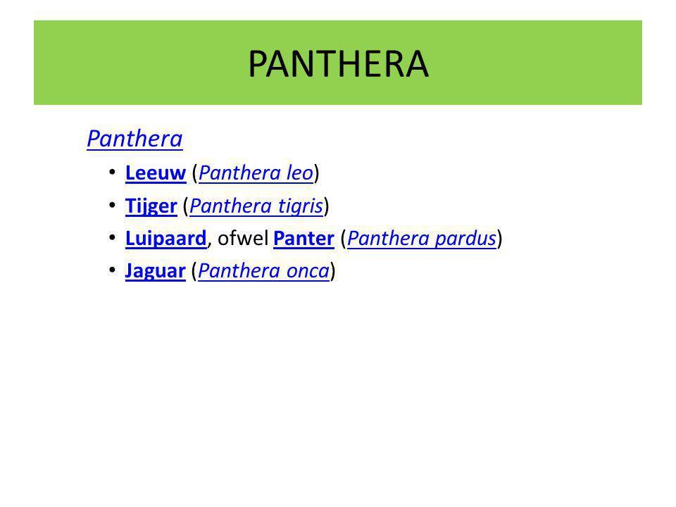 PANTHERA Panthera Leeuw (Panthera leo) Tijger (Panthera tigris)