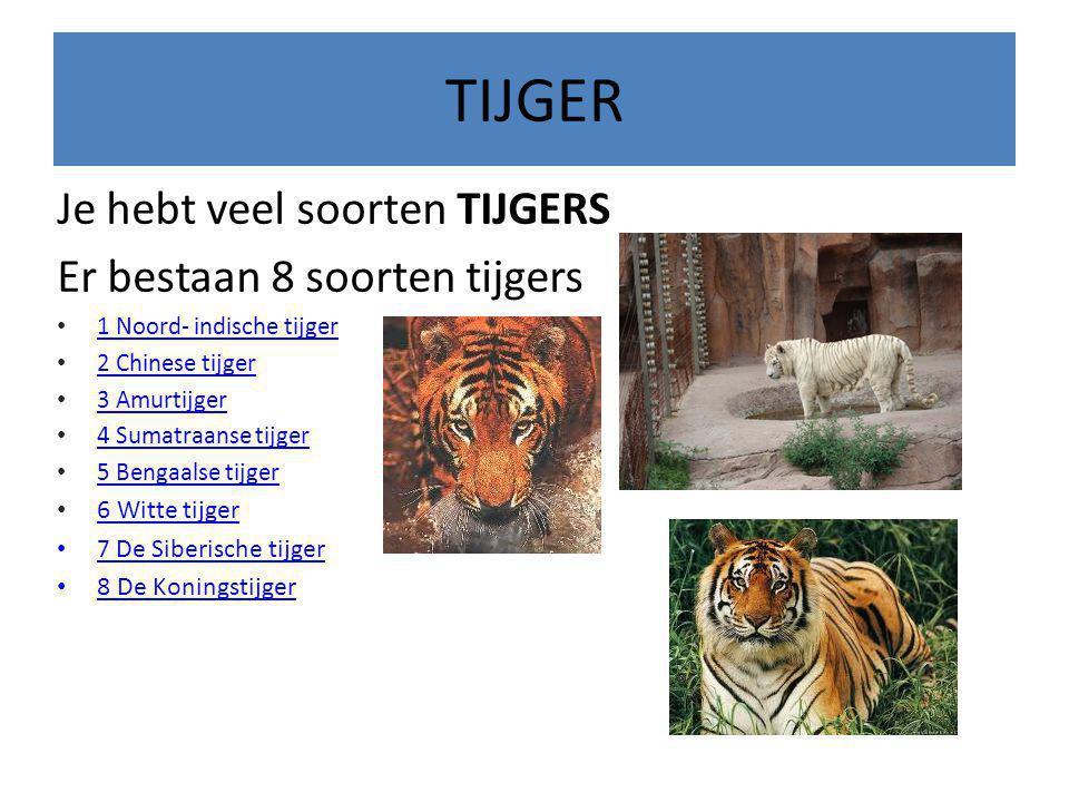 TIJGER Je hebt veel soorten TIJGERS Er bestaan 8 soorten tijgers