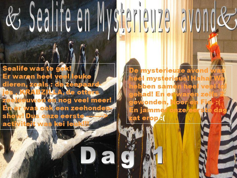 Sealife en Mysterieuze avond