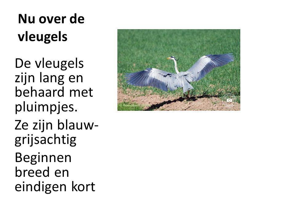 De vleugels zijn lang en behaard met pluimpjes.