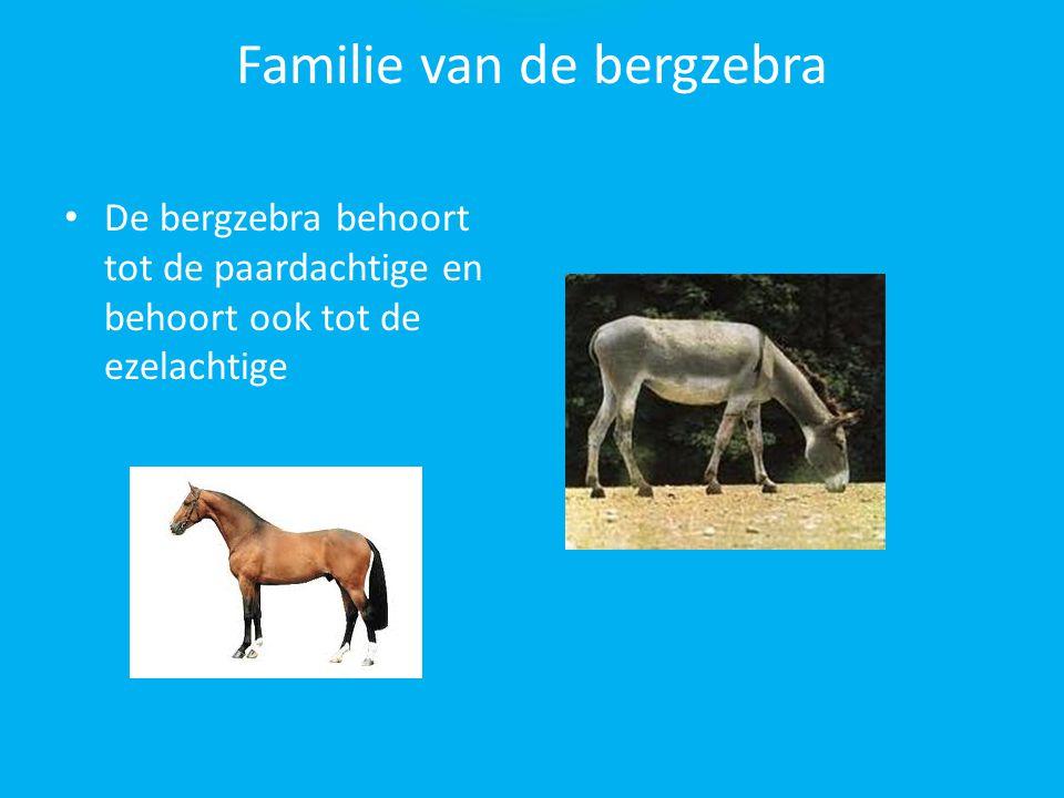 Familie van de bergzebra