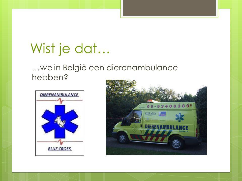 Wist je dat… …we in België een dierenambulance hebben