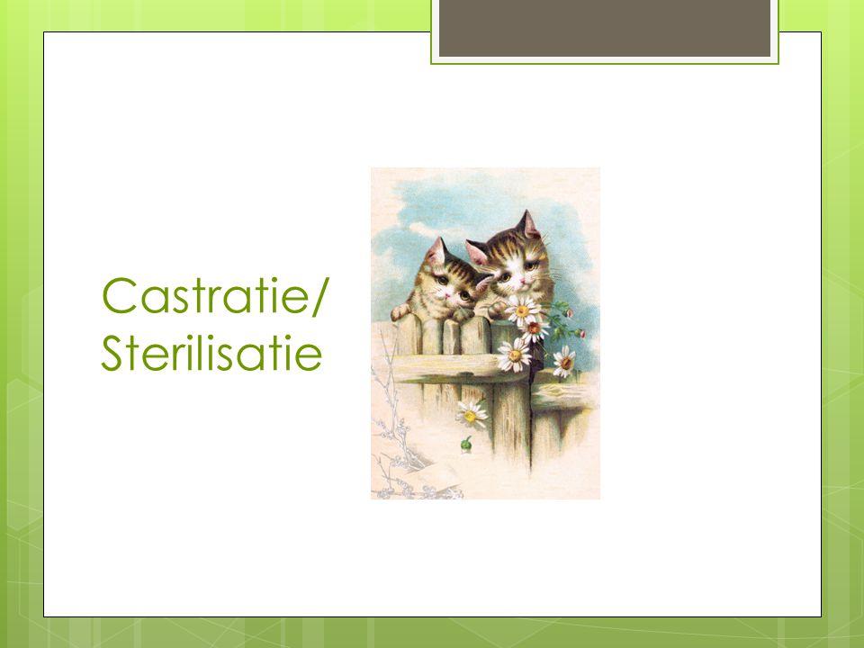 Castratie/Sterilisatie