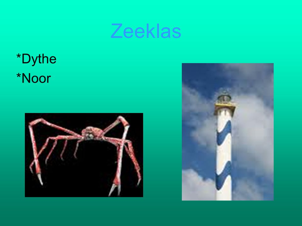 Zeeklas *Dythe *Noor