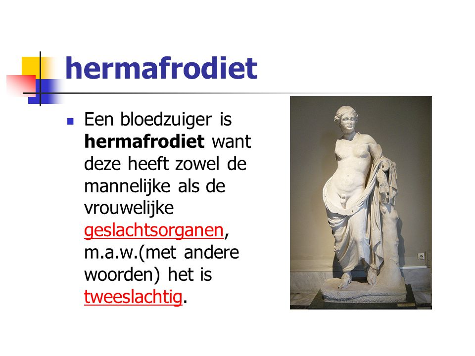 hermafrodiet