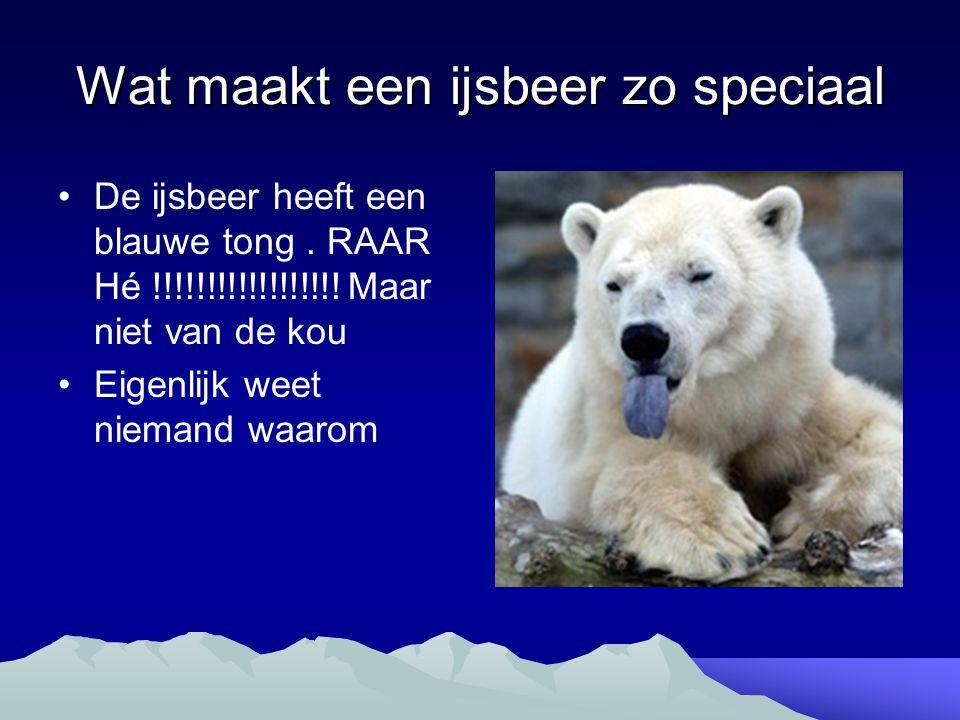 Wat maakt een ijsbeer zo speciaal