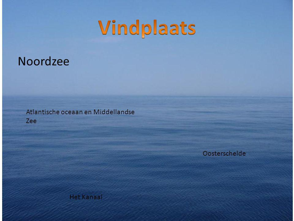 Vindplaats Noordzee Atlantische oceaan en Middellandse Zee