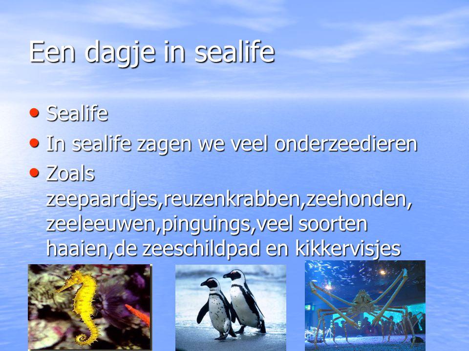 Een dagje in sealife Sealife In sealife zagen we veel onderzeedieren