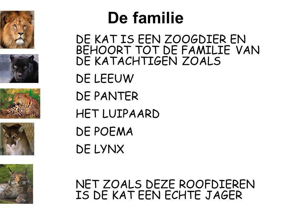De familie DE KAT IS EEN ZOOGDIER EN BEHOORT TOT DE FAMILIE VAN DE KATACHTIGEN ZOALS. DE LEEUW. DE PANTER.