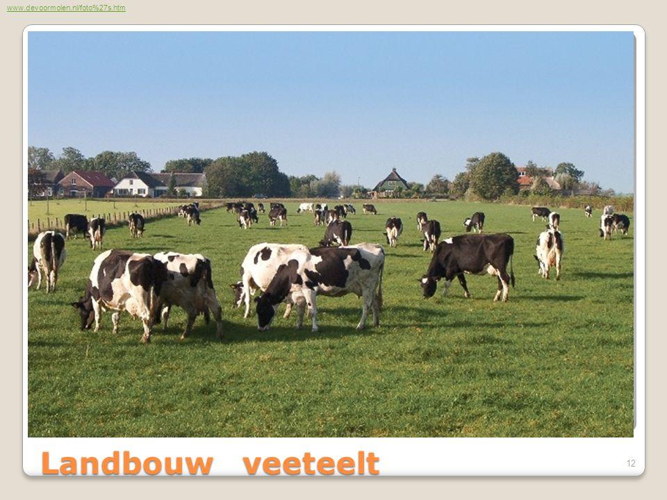www.devoormolen.nl/foto%27s.htm Landbouw veeteelt