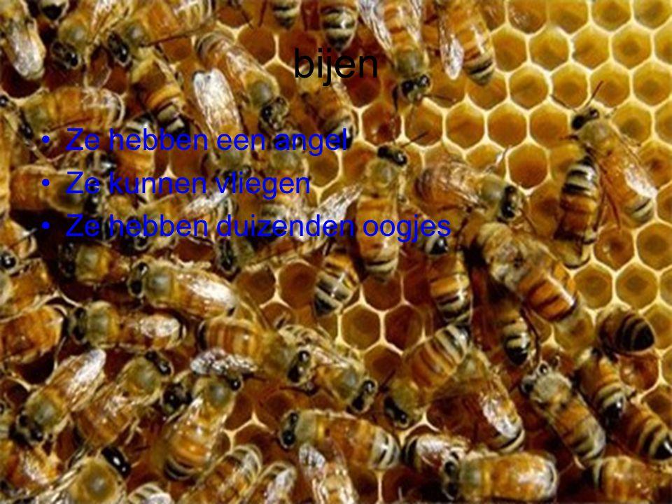 bijen Ze hebben een angel Ze kunnen vliegen Ze hebben duizenden oogjes