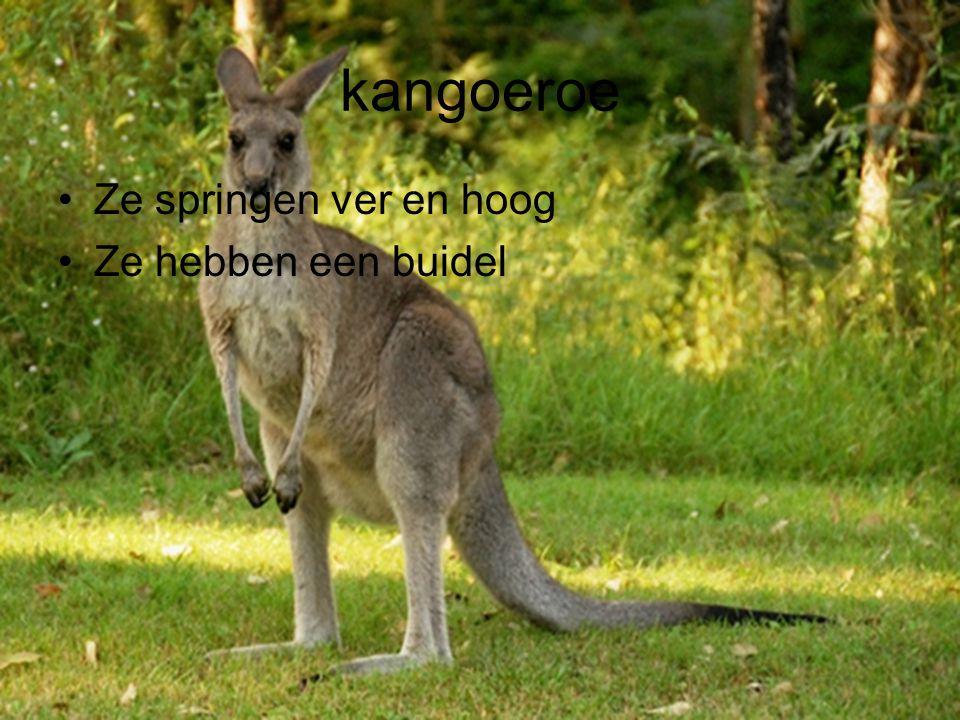 kangoeroe Ze springen ver en hoog Ze hebben een buidel