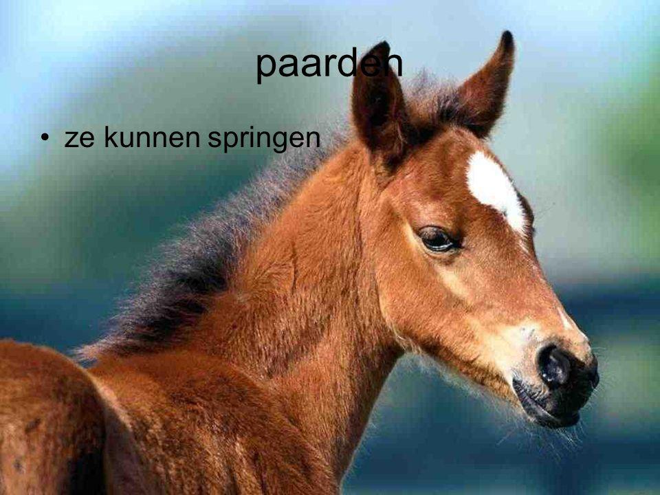 paarden ze kunnen springen