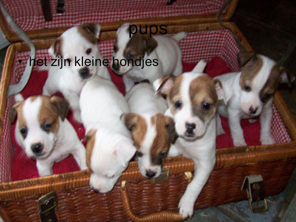 pups het zijn kleine hondjes