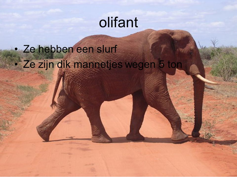 olifant Ze hebben een slurf Ze zijn dik mannetjes wegen 5 ton