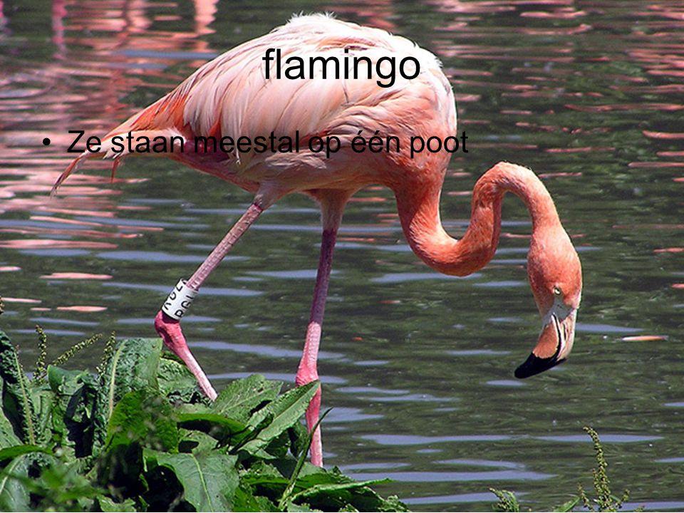 flamingo Ze staan meestal op één poot