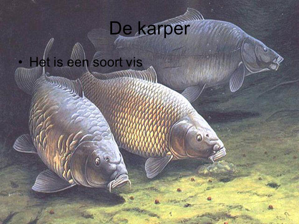 De karper Het is een soort vis