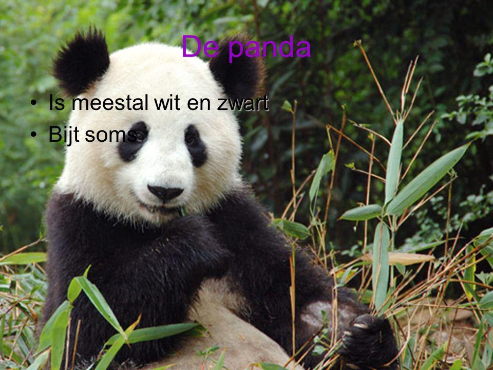 De panda Is meestal wit en zwart Bijt soms