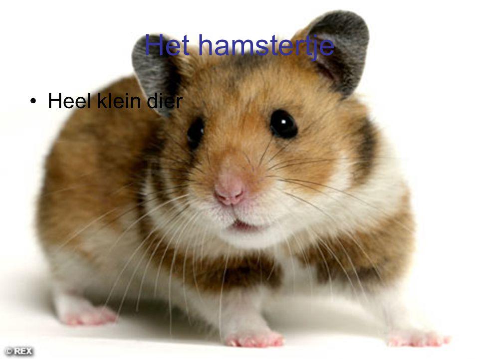 Het hamstertje Heel klein dier