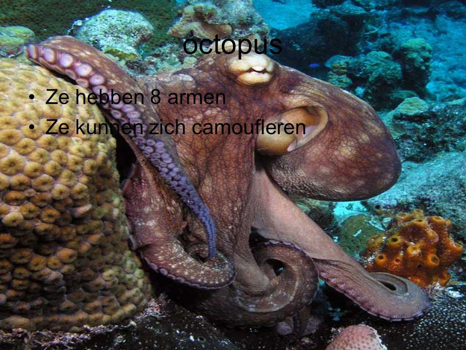 octopus Ze hebben 8 armen Ze kunnen zich camoufleren