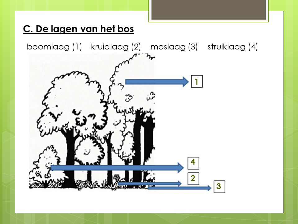 C. De lagen van het bos boomlaag (1) kruidlaag (2) moslaag (3) struiklaag (4) 1 4 2 3