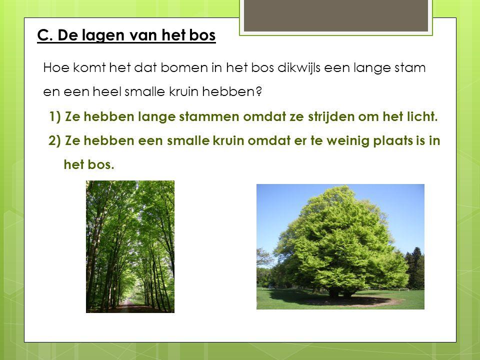 C. De lagen van het bos Hoe komt het dat bomen in het bos dikwijls een lange stam. en een heel smalle kruin hebben
