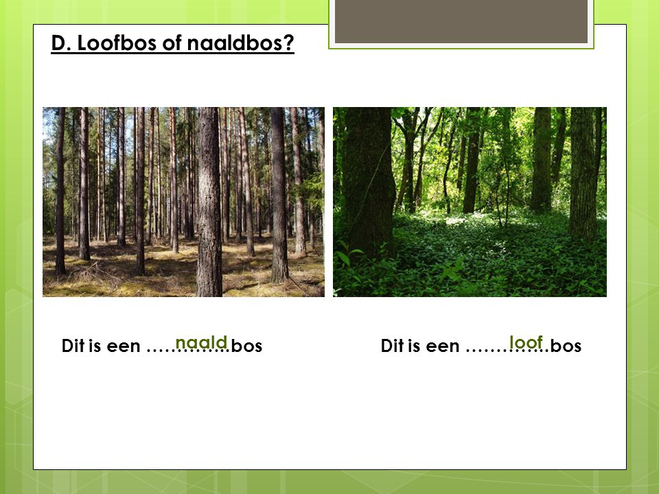 D. Loofbos of naaldbos Dit is een …………..bos Dit is een …………..bos