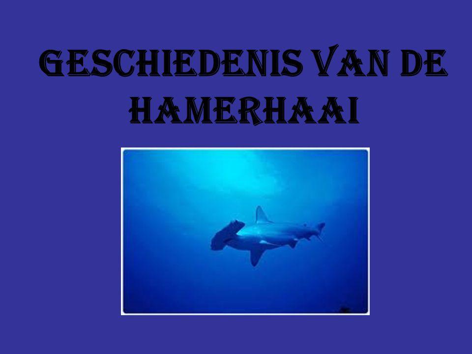 Geschiedenis van de hamerhaai