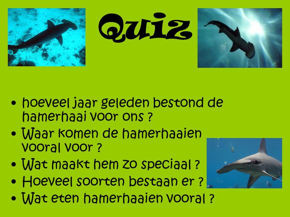 Quiz hoeveel jaar geleden bestond de hamerhaai voor ons