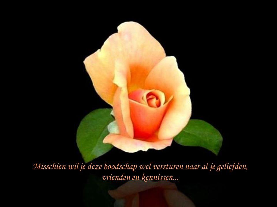 Misschien wil je deze boodschap wel versturen naar al je geliefden, vrienden en kennissen...