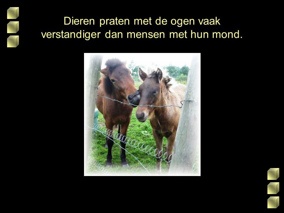 Dieren praten met de ogen vaak verstandiger dan mensen met hun mond.