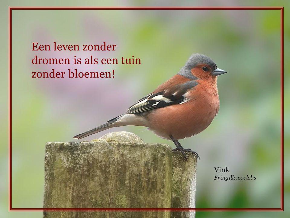 Een leven zonder dromen is als een tuin zonder bloemen!