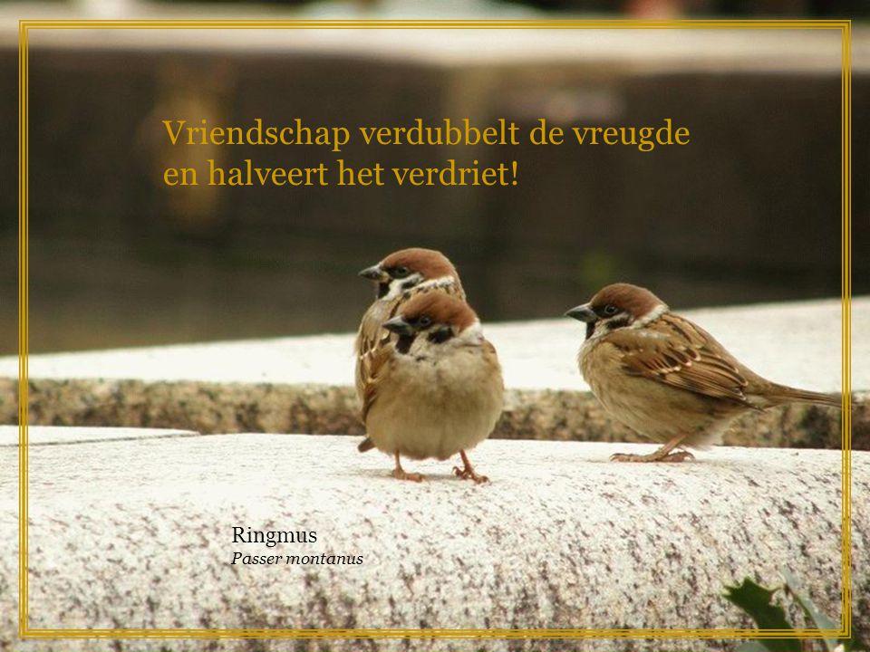 Vriendschap verdubbelt de vreugde en halveert het verdriet!