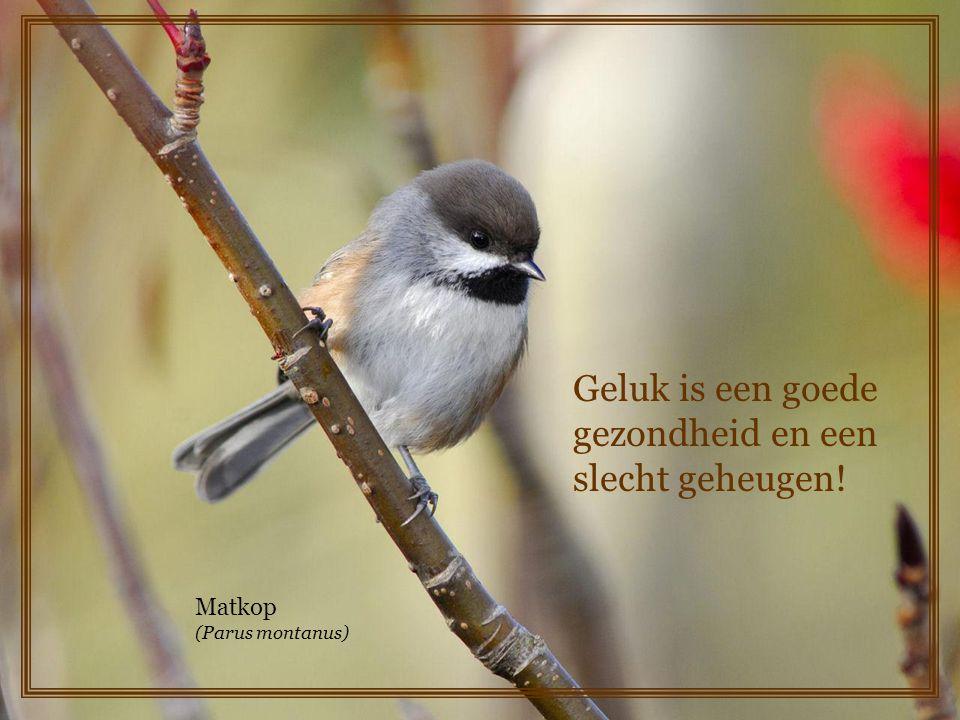 Geluk is een goede gezondheid en een slecht geheugen!