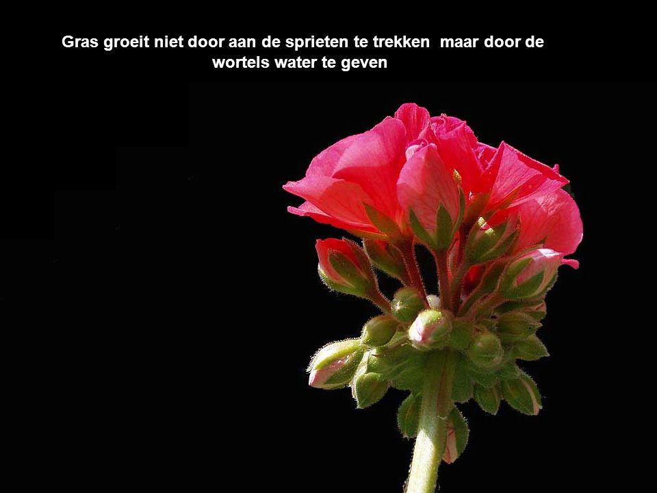 Gras groeit niet door aan de sprieten te trekken maar door de wortels water te geven
