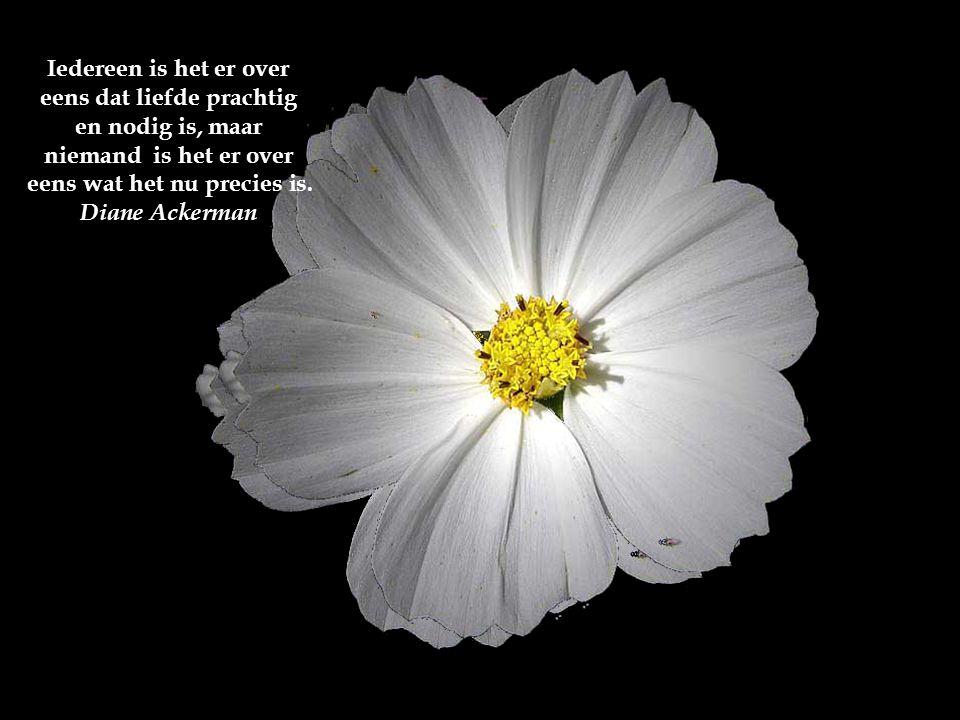 Iedereen is het er over eens dat liefde prachtig en nodig is, maar niemand is het er over eens wat het nu precies is.