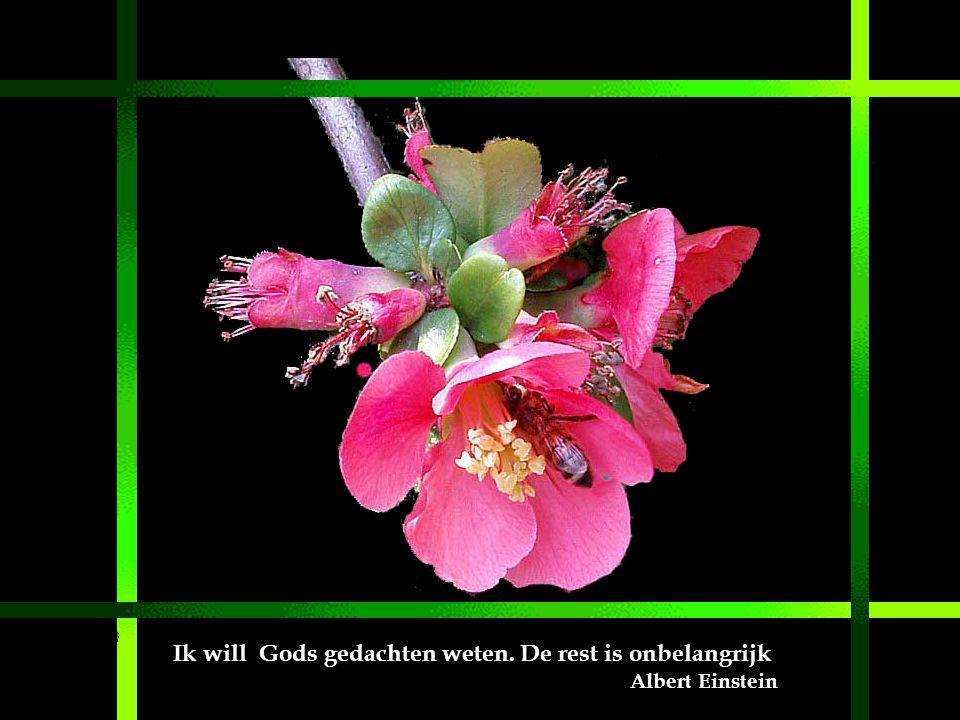 Ik will Gods gedachten weten. De rest is onbelangrijk